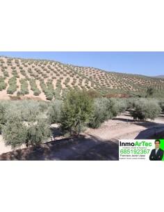 finca olivos y recreo
